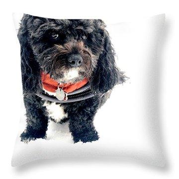 Black Cavachon Portrait Throw Pillow