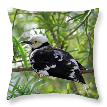 Black Collared Beauty Throw Pillow
