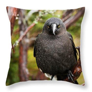 Black Currawong Throw Pillow