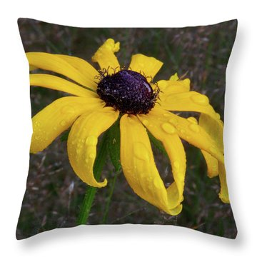 Throw Pillow featuring the photograph Black Eyed Susan by Dale Kincaid