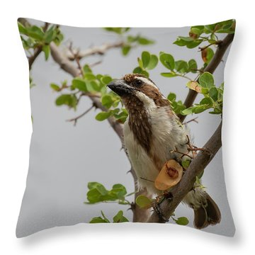 Black-throated Barbet Throw Pillow