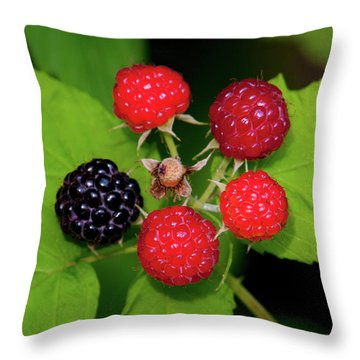 Throw Pillow featuring the photograph Blackberries by Jeff Phillippi