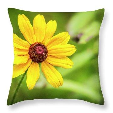 Blackeyed Sue Throw Pillow