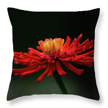 Throw Pillow featuring the photograph Blazing Red by Dale Kincaid