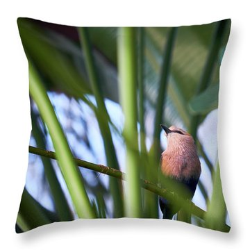 Throw Pillow featuring the photograph Blue-bellied Roller by Whitney Goodey
