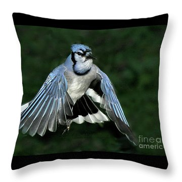 Throw Pillow featuring the photograph Blue Jay by Debbie Stahre