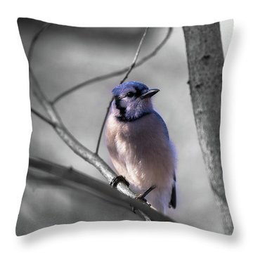 Throw Pillow featuring the photograph Blue Jay by Dheeraj Mutha