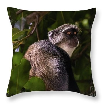 Blue Monkey, Zanzibar Throw Pillow