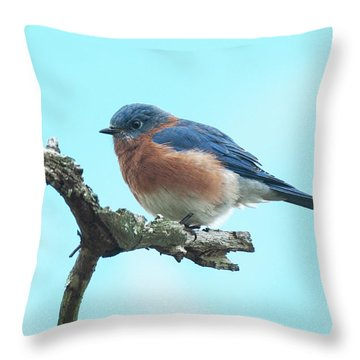 Throw Pillow featuring the photograph Blue On Blue Eastern Bluebird by Lara Ellis
