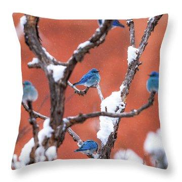 Bluebird Compass Throw Pillow