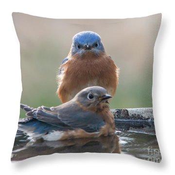 Bluebird Gothic Throw Pillow
