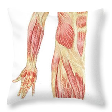 Body Muscles Anatomy Study Anterior View Throw Pillow
