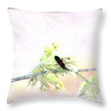 Boxelder Bug In Morning Haze Throw Pillow