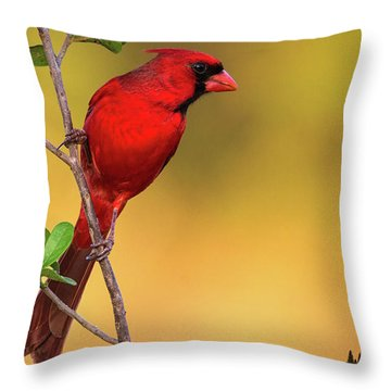 Bright Red Cardinal Throw Pillow