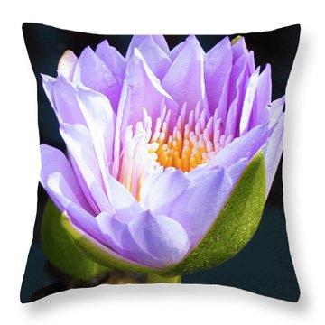 Brillance In Purple Throw Pillow