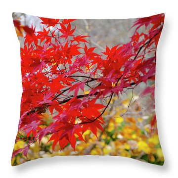 Brilliant Fall Color Throw Pillow