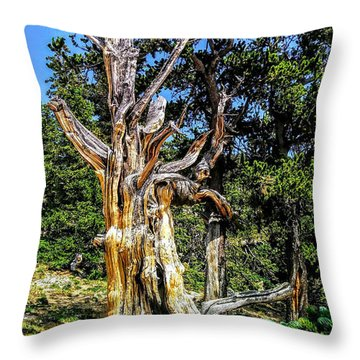 Throw Pillow featuring the photograph Bristlecone1 2018 by Aaron Bombalicki
