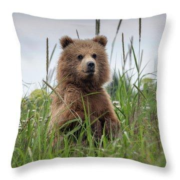 Brown Bear Cub In A Meadow Throw Pillow
