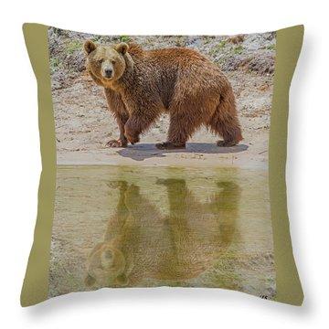 Brown Bear Reflection Throw Pillow