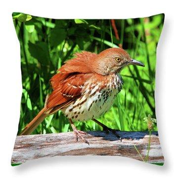Brown Thrasher Throw Pillow