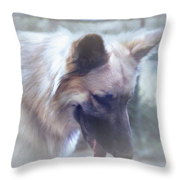 Bruce Looking Down Throw Pillow