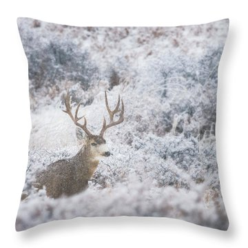 Buck In The Snow Throw Pillow