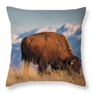 Buffalo Grazing At Dawn Throw Pillow