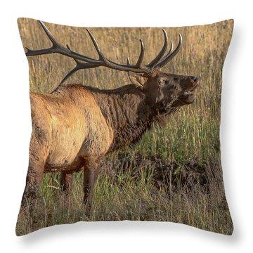 Bugling Bull Elk 7777 Throw Pillow
