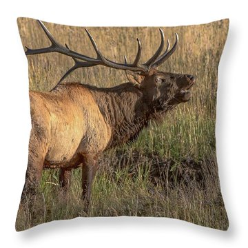 Bugling Bull Elk 7777 Throw Pillow