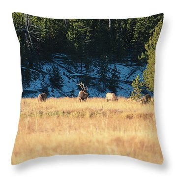 Throw Pillow featuring the photograph Bull And His Babes by Pete Federico