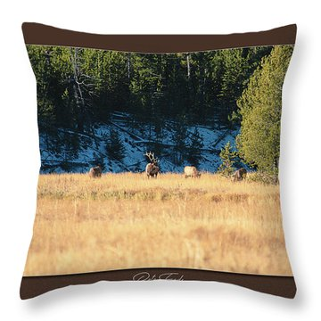 Throw Pillow featuring the photograph Bull And His Babes Poster by Pete Federico