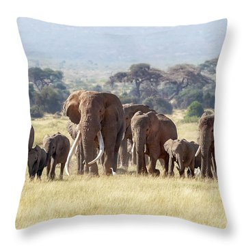 Bull Elephant With A Herd Of Females And Babies In Amboseli, Kenya Throw Pillow