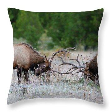 Bull Elk Battle Rocky Mountain National Park Throw Pillow