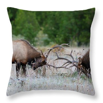Throw Pillow featuring the photograph Bull Elk Battle Rocky Mountain National Park by Nathan Bush