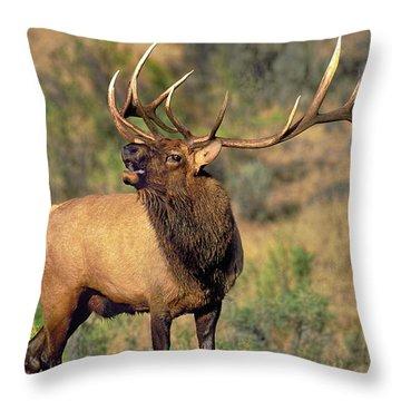 Bull Elk In Rut Bugling Yellowstone Wyoming Wildlife Throw Pillow