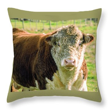 Bull In The Country Side Of Tasmania. Throw Pillow