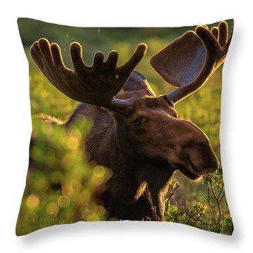Bull Moose Enjoys A Light Sunrise Rain Throw Pillow