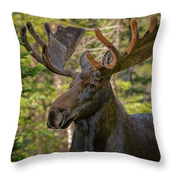 Bull Moose Glamour Shot Throw Pillow