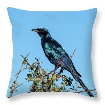 Burchell's Starling Throw Pillow