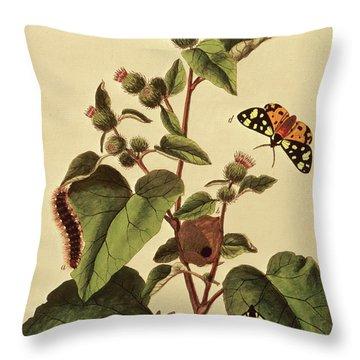 Butterflies, Caterpillars And Plants  Plate Vii Throw Pillow
