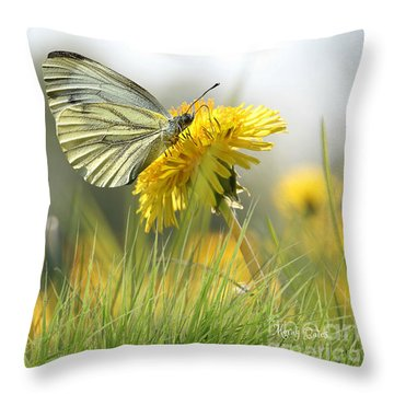 Butterfly On Dandelion Throw Pillow