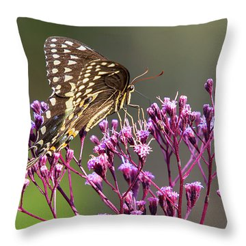 Butterfly On Wild Flowers Throw Pillow