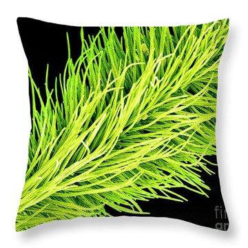 C016/0065 Throw Pillow