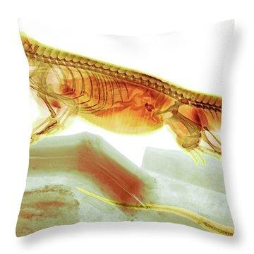 C025/8504 Throw Pillow