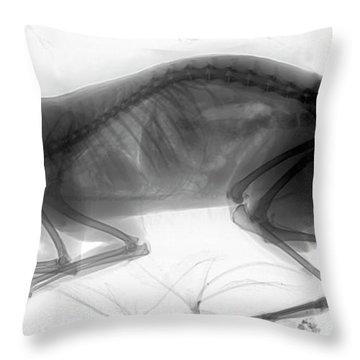 C026/6424 Throw Pillow