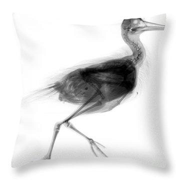 C026/7624 Throw Pillow