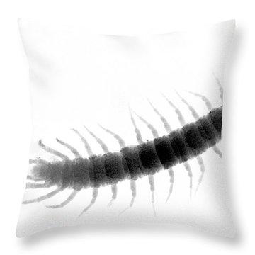C027/0097 Throw Pillow