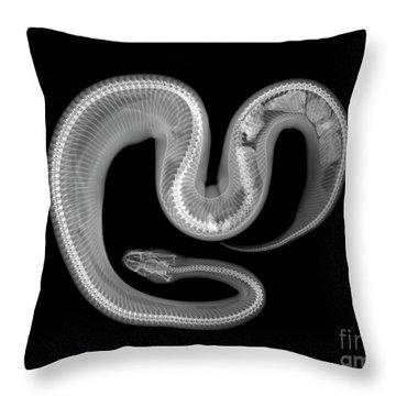 C037/4690 Throw Pillow