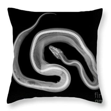 C037/4692 Throw Pillow