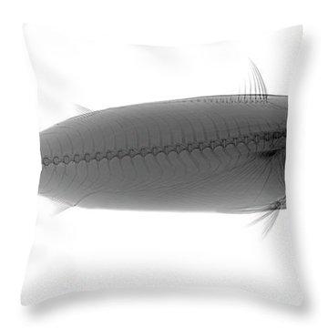 C037/9598 Throw Pillow